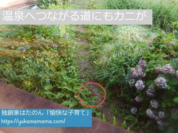 休暇村南紀勝浦の温泉へ向かう廊下窓の外にカニを発見