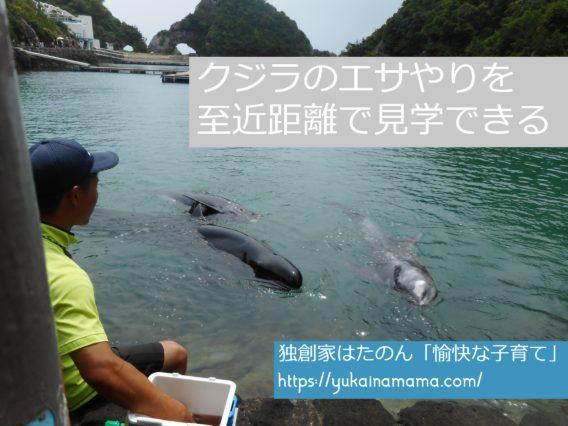 スタッフがショーに出演したクジラ三匹に魚をあげているところ
