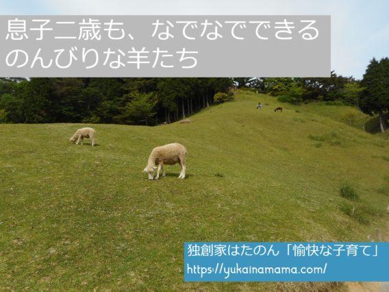 野原をゆっくり歩く羊