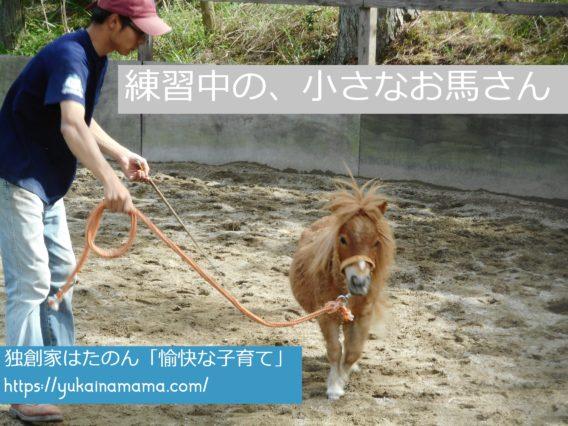 飼育員さんと一緒に練習する小さな馬