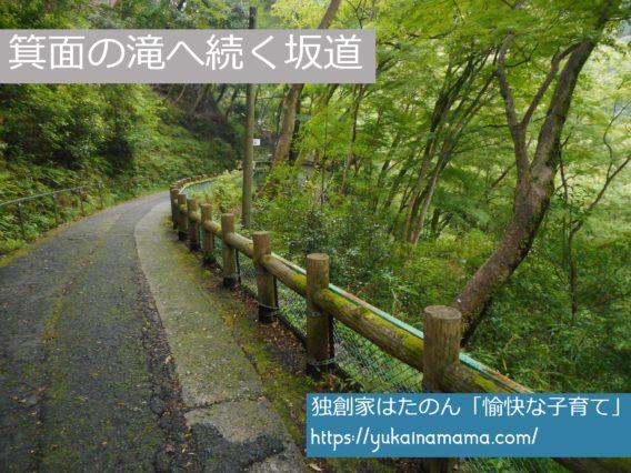 木々のなかを抜ける箕面の滝へ向かう坂道