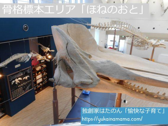巨大なクジラの骨や小さな生き物の骨が展示されている