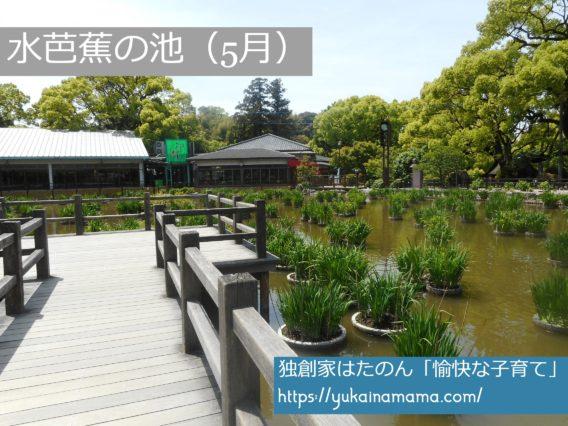 たくさんの水芭蕉が並ぶ池