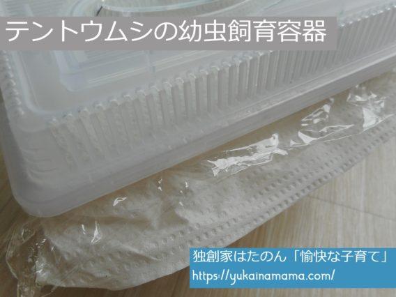 水槽型の虫かごにキッチンペーパーとラップで作ったテントウムシの幼虫飼育容器