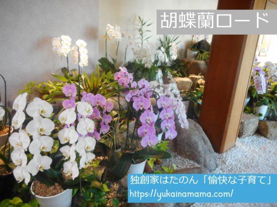 旅館名のように「胡蝶蘭」が咲き誇るロビー