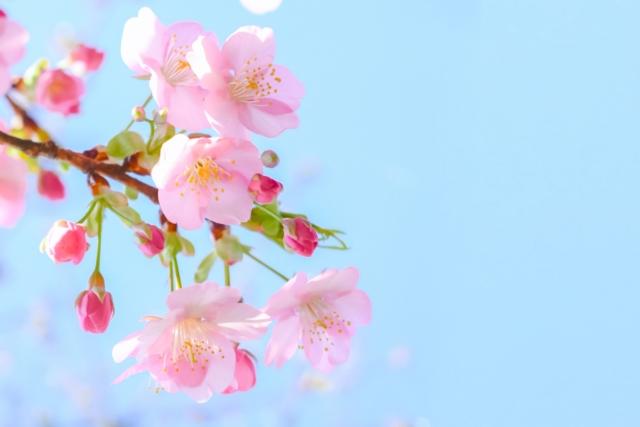 青空のなかに咲く桃色の桜