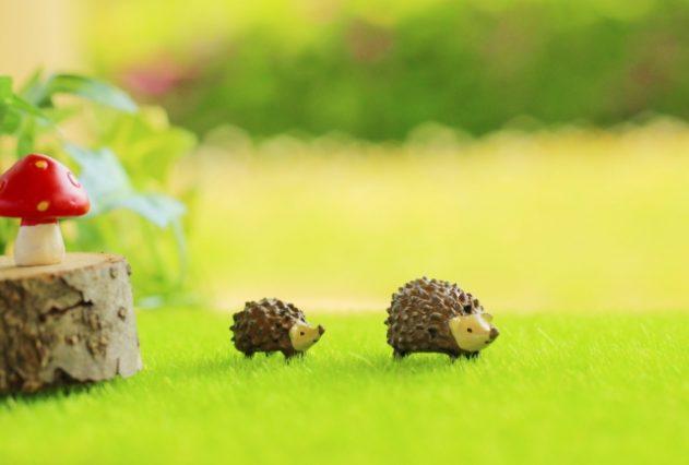 親子で仲良く歩くハリネズミ
