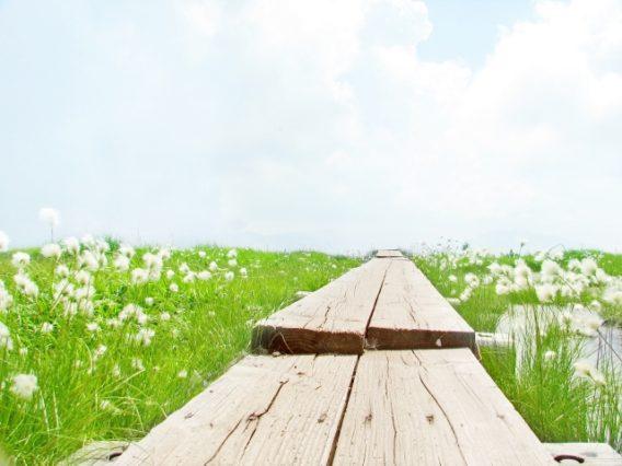 ふわふわ揺れる白い花とまっすぐ続く道