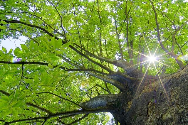 木のあいだから見える太陽の光