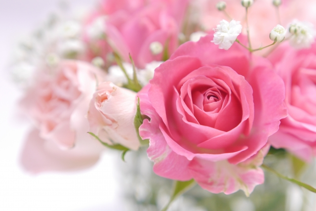 自由に咲き誇るピンクのバラ