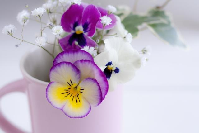 希望の花言葉をもつかすみそうと、紫のパンジー