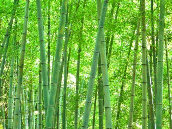 さわやかな竹林
