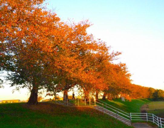 紅葉のある道を歩く