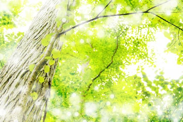キラキラ輝く新緑