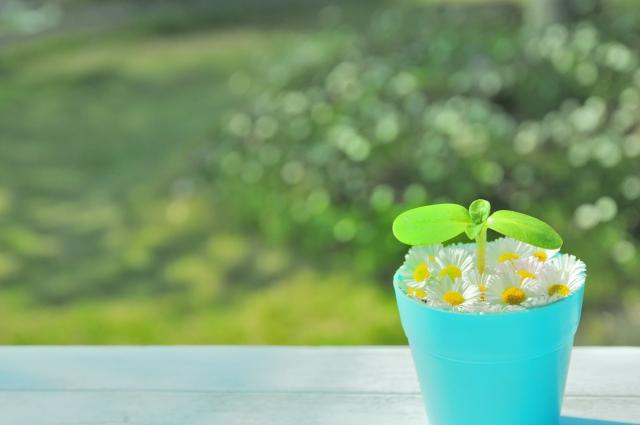 懐かしくなる花と新芽