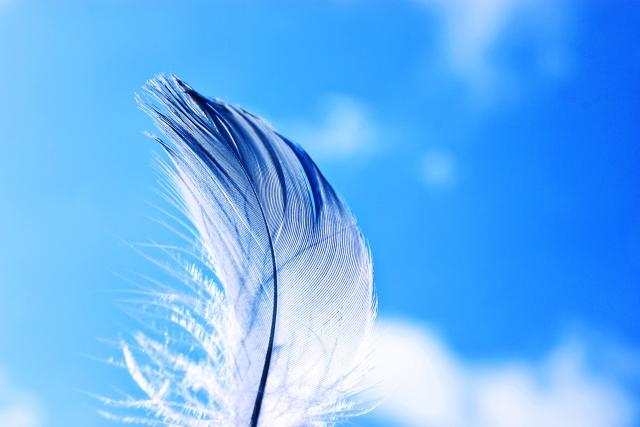 青い空と青い羽