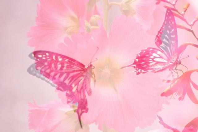 なかよしの2匹のアゲハ蝶