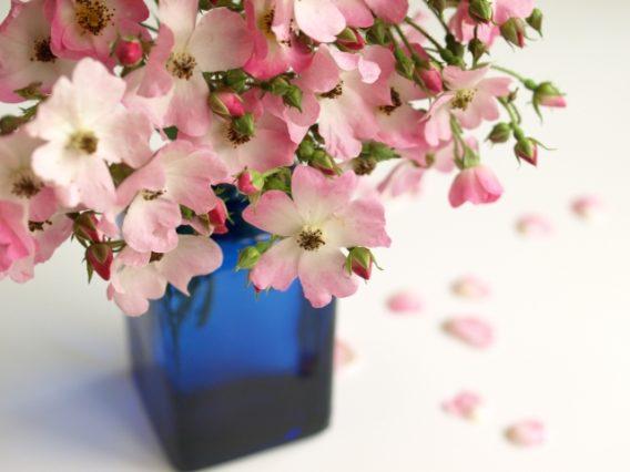 小さな小瓶に入ったピンク色のバラ