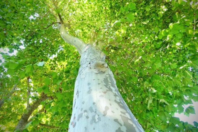 木のあいだから届く太陽の光